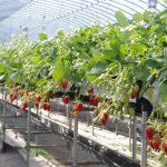 農業関連におけるフロー・ストックビジネスを考える